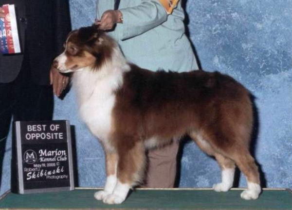 AKC CH Aliyahs Patriot of MILL Creek