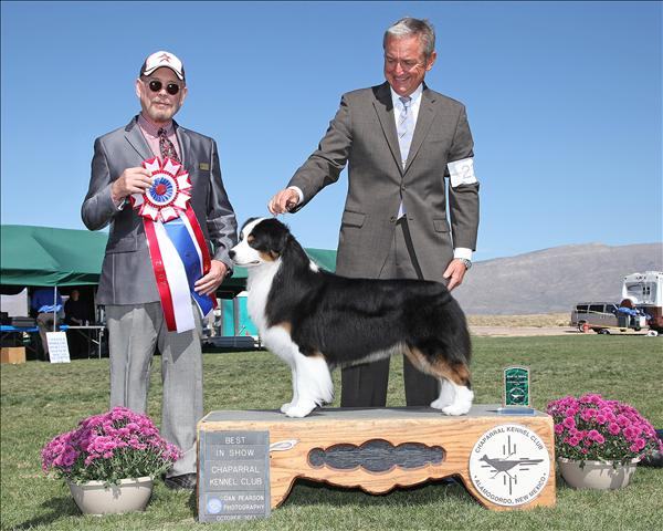 HOF GCH AKC/ASCA CH Harmony Hill's Money Talks