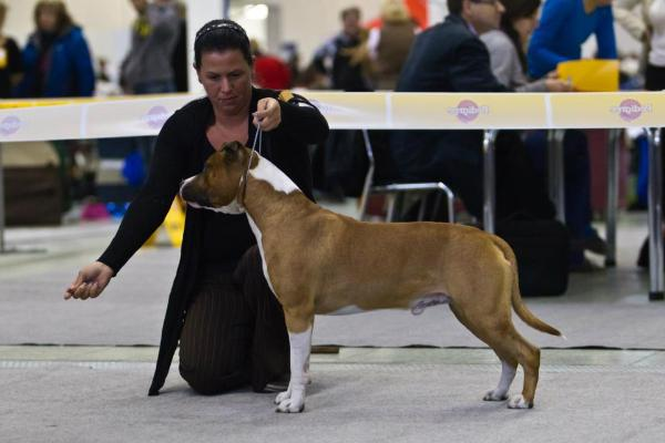 CH Blue Rock Call Me Supreme