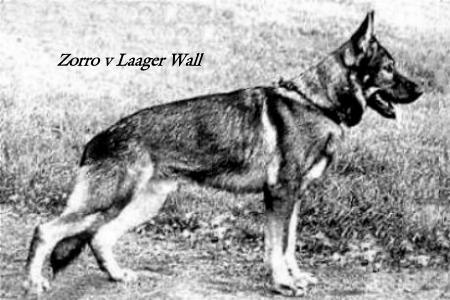 V Zorro vom Laager Wall