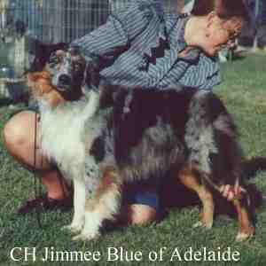 HOF CH Jimmee Blue of Adelaide