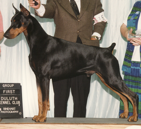 That Looks Like A Rottweiler But Skinny