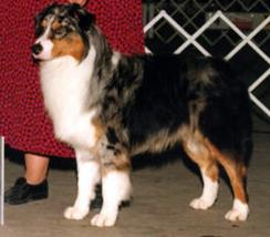 AKC CH. Briarbrook's Prototype