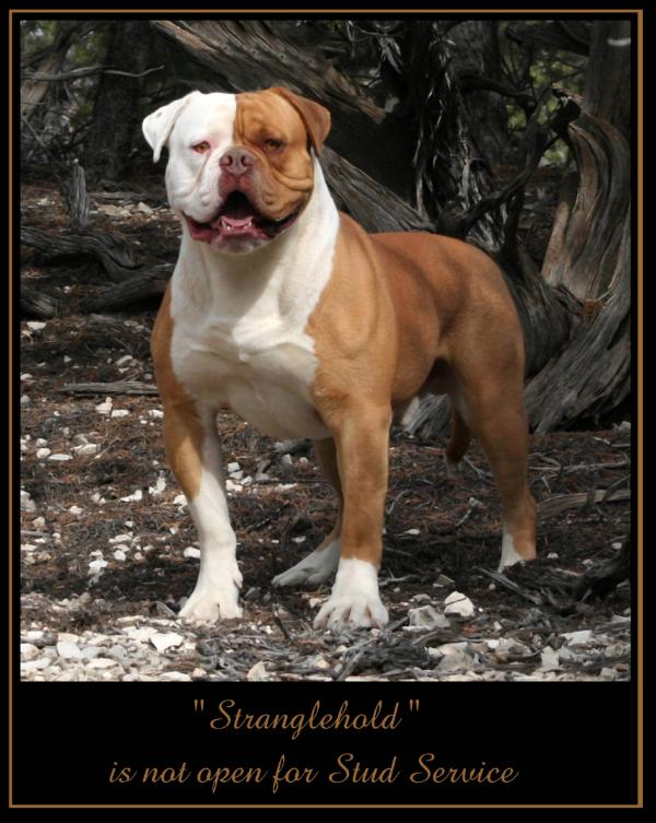 Stranglehold of Red Canyon Kennel