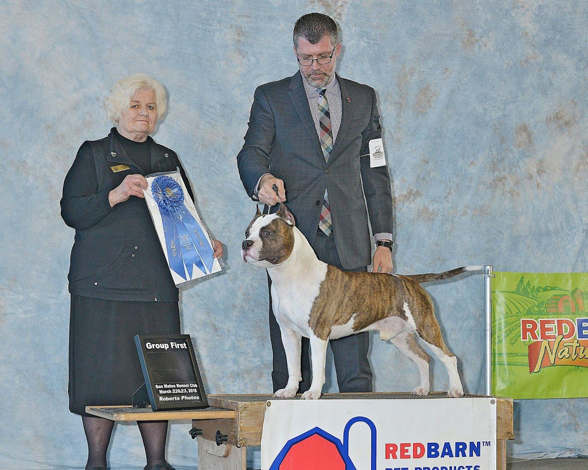 AKC Grand Champion Old School Kennels Majestic Kentucky Vintage Spirit