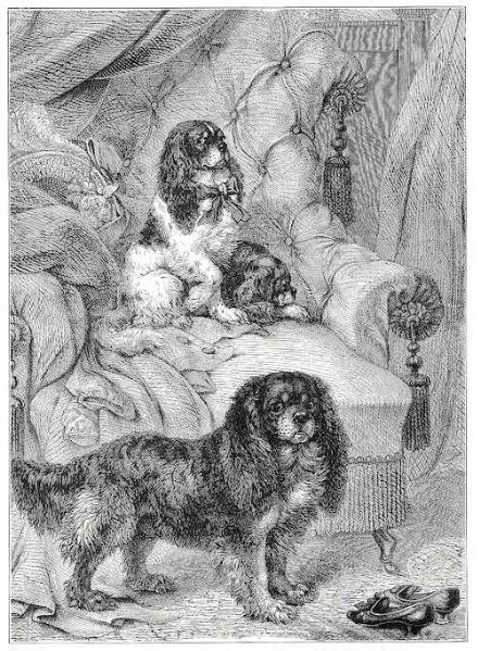 Early Type Toy Spaniels (1881)