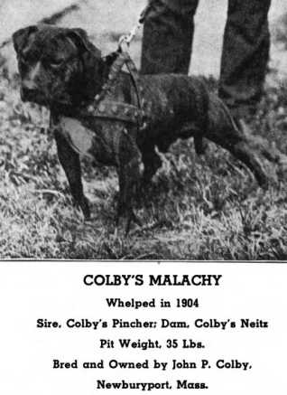 Colby's Malachy