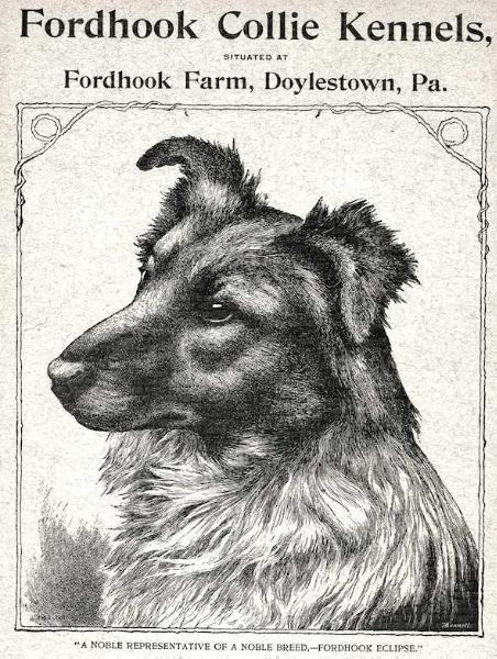 Fordhook Eclipse (c.1893) [Fordhook Collie Kennel's]