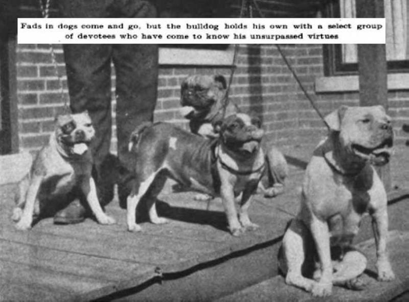 Assorted Bulldogs of 1908