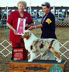 HOF AKC/ASCA CH Broadways Blaze of Glory