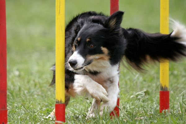 Agility training - Shalom