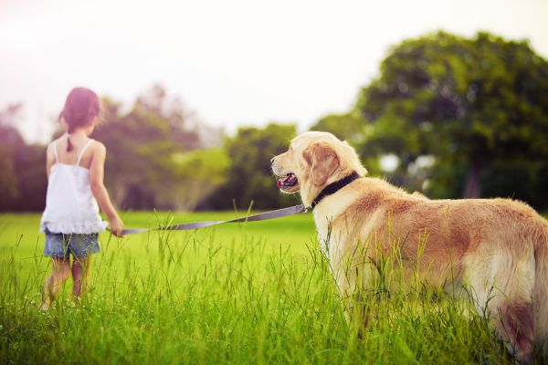 The Life Expectancy of Your Dog
