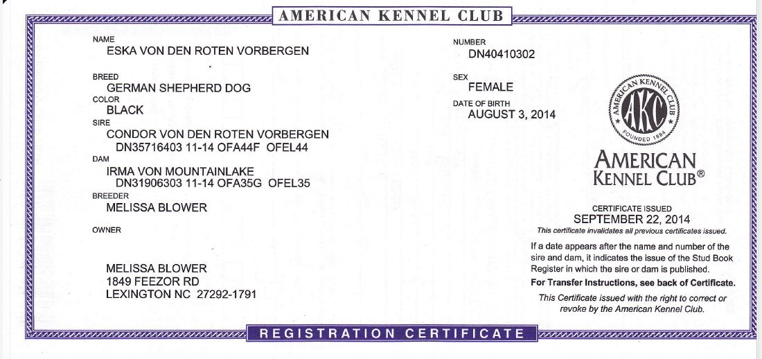 I'm wondering how to get into showing my AKC Male   - Page 2