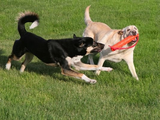 Getting a Second Dog – Pros and Cons