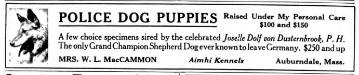 Joselle's Dolf von Düsternbrook (Historical Puppy Advertisement)