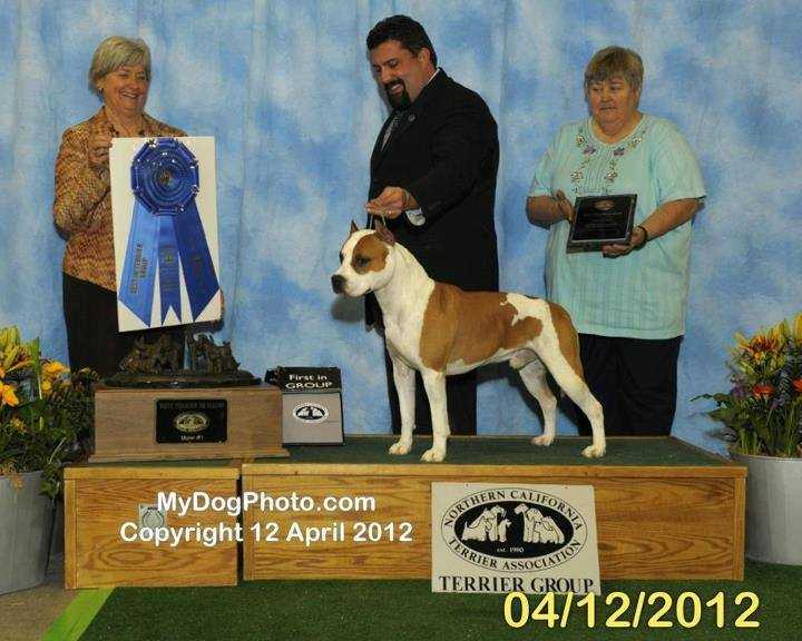 National BISS BIS Multi CH AKC GCH Alpine's Catch Me If You Can