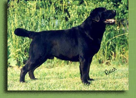 AKC CH Empress Big Skys Blood And Guts