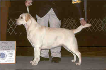 AKC CH Caer Bren's Water Lilly