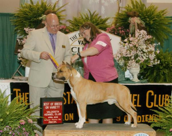 GCH Benmar's Shooter's Arrow