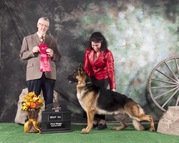 CAN GCH EX AM/UKC CH Hellwigg's Let Freedom Reign
