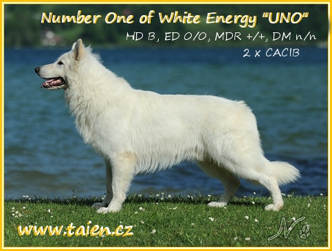 CHAMPION NUMBER ONE of White Energy
