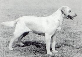 Ch. Poolstead Kinley Willow