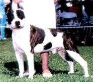 CH Harmony's Jazzie Max Of Camelot