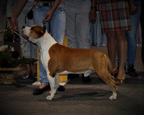INT CH,USA, INTERRA WINNER 2007,CLUB,RUS,UKR,MOL, JRUS,JUK Chronos Virginia Renegade