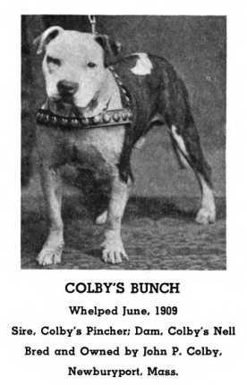Colby's Bunch