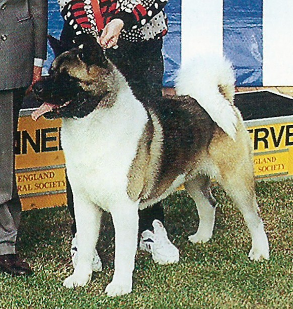 UK CH Redwitch Prince Consort At Stecal