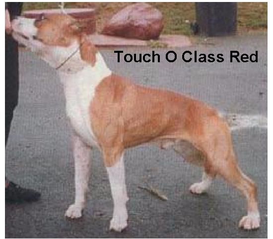 CAN CH Touch O'Class QED