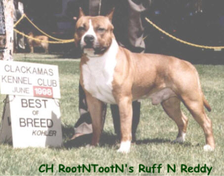 CH (US) Rootntootn's Ruff N Reddy