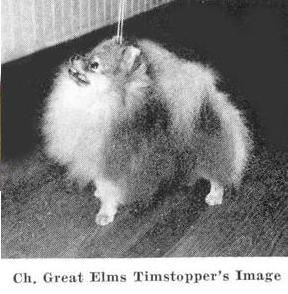 AM CH Great Elms Timstopper's Image