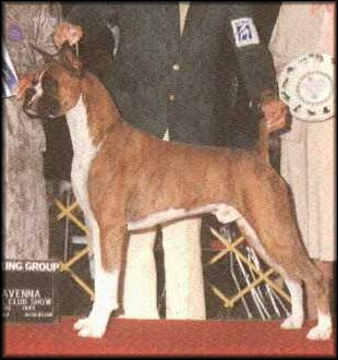 CH (INT/AKC) Wagner Wilverday Famous Amos