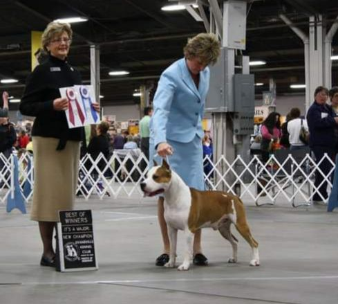 MULTI. AKC.CH Sindelar's Kentucky Boy