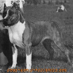 CH AKC Herring's Bewitching Tabatha (Kinder's)