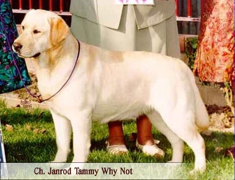 CH Janrod's Tammy Why Not