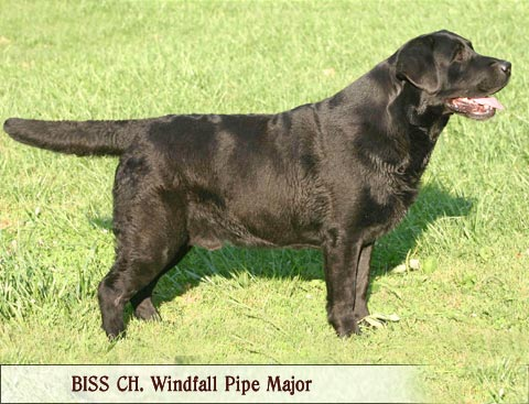 BISS AKC CH Windfall's Pipe Major