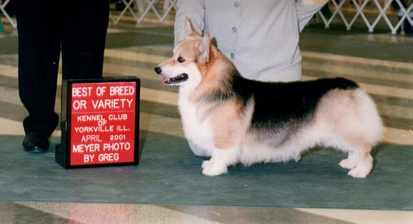 CH (AKC) Pentalar Star Struck of Revelmere