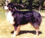 HOF ASCA Ch. Windermeres Sunshine of Bonnie Blu