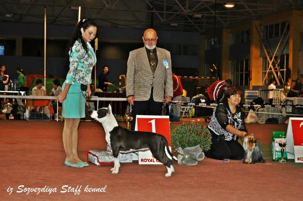 J.WINNER INTERRA'13, INT Ch. Diamond Shine iz Sozvezdiya Staff