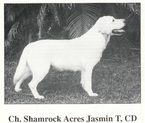 Shamrock Acres Jasmin T