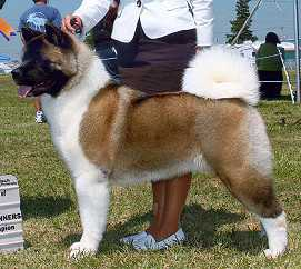 AKC,CAN СH, GCH Dembe's Forest Fire