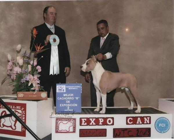 Cavalier in the ring (Cardenas) by Flotta's