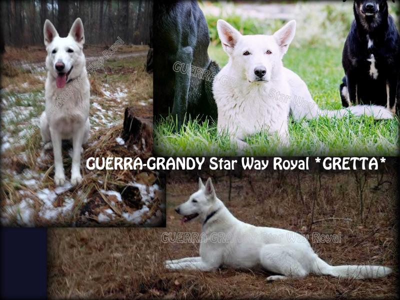GUERRA-GRANDY Star Way Royal (GRETTA)