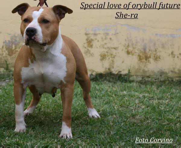 special love fory bull s future