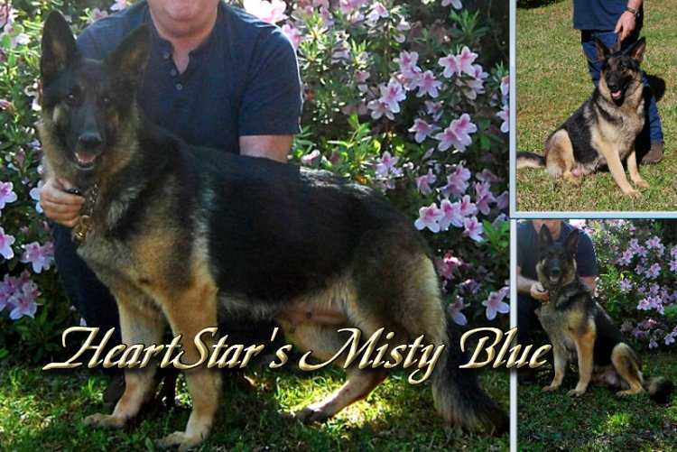 HeartStar's Misty Blue