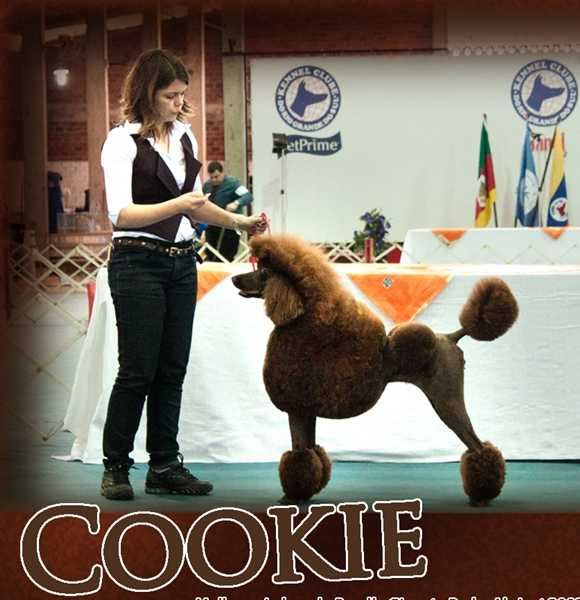 CH. JOV. Family Affair´s Chocolate Cookie at Quindim
