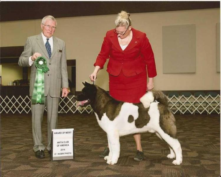 AKC GCH Liberty's Dr. Feelgood