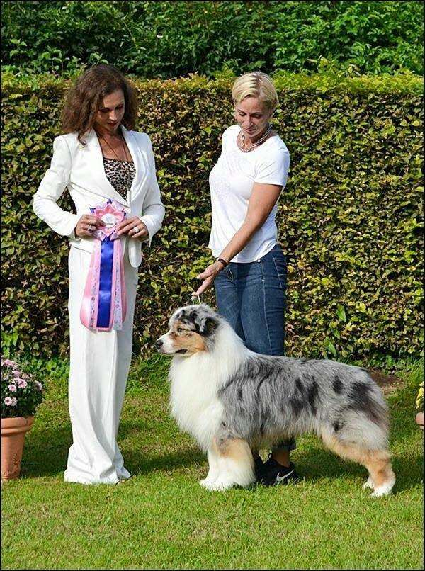 HOF ASCA CH AKC CH Eminence Of The Mighty Crown